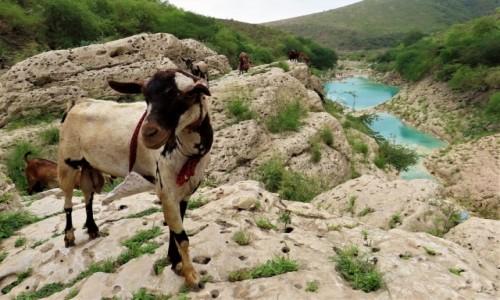 Zdjecie OMAN / Dhofar / - / Wadi Darbat