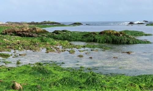 Zdjecie OMAN / Dhofar / - / Wybrzeże Oceanu Indyjskiego
