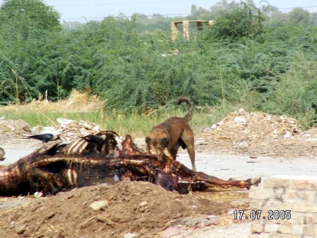 Zdjęcia: Jacobabad, Balochistan, Jacobabad miasto śmierci, PAKISTAN