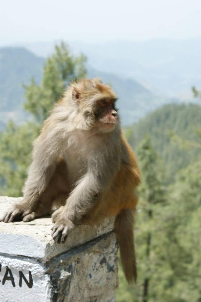 Zdjęcia: Pakistanu, góry Pakistan, PAKISTAN