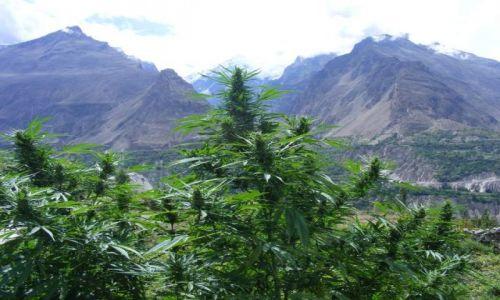 Zdjecie PAKISTAN / Karakorum Highway / Gilgit - Sust / Pakistan - Karakorum Highway