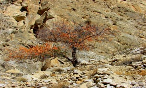 Zdjęcie PAKISTAN / Hunza / Hunza / Samotne