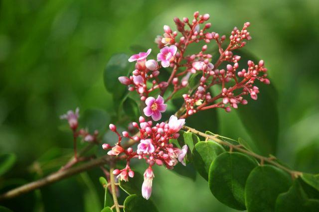 Zdjęcia: Palau, w styczniu też może być wiosna, PALAU