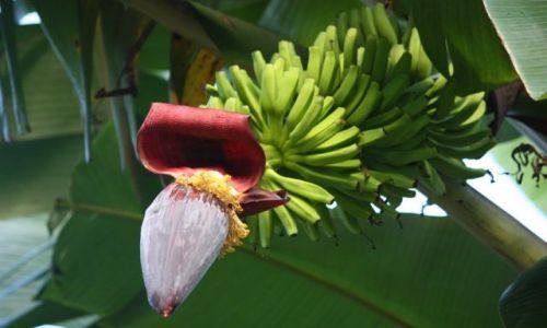Zdjęcie PALAU / - / Palau / bananowiec