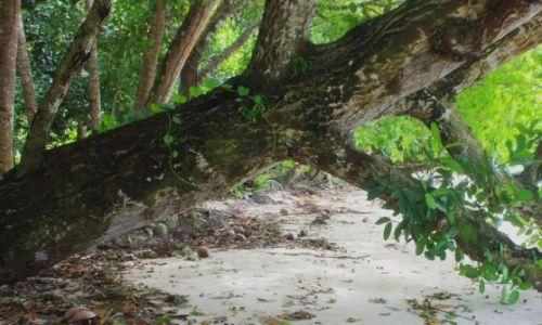 Zdjęcie PALAU / - / Palau / leży na plaży