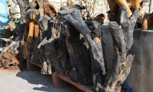 Zdjęcie PALESTYNA / - / Betlejem / drewno oliwne