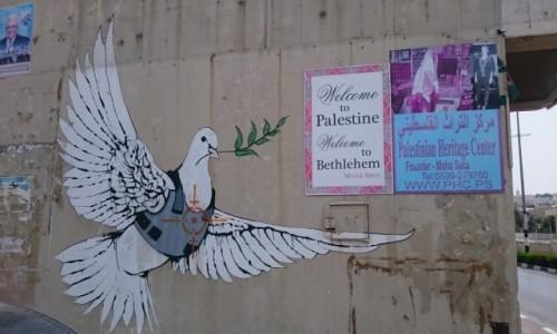 Zdjęcie PALESTYNA / - / Betlejem / Gołąbek na murze od strony Palestyny
