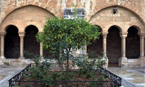 Zdjęcie PALESTYNA / Betlejem / Kościół św. Katarzyny / Drzewko pomarańczowe na dziedzińcu
