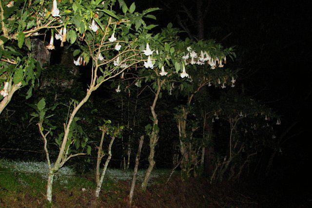 Zdjęcia: Parque Nacional Volcan Baru, Boquete, W drodze na Volcan Baru, PANAMA