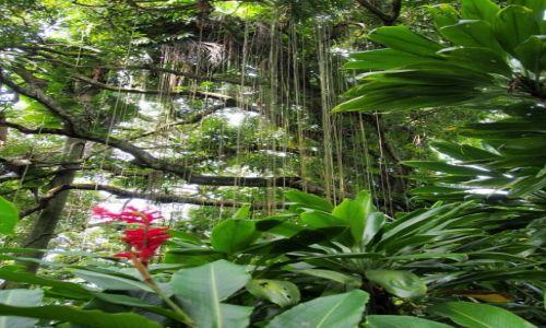 Zdjecie PANAMA / Bocas del Toro / Solarte / las