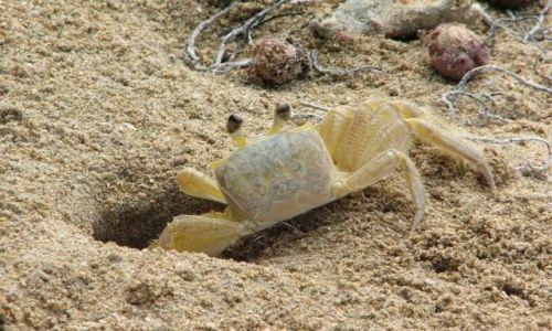 Zdjęcie PANAMA / Bocas del Toro / Isla Colon, Playa Drago / Kto mnie złapie?