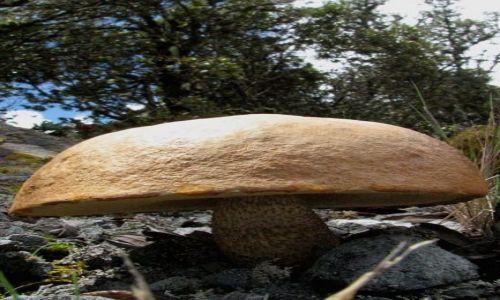 Zdjecie PANAMA / Boquete / Parque Nacional Volcan Baru / W drodze na Volcan Baru