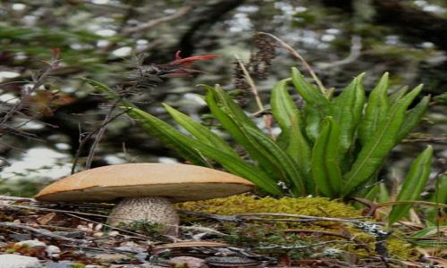 Zdjęcie PANAMA / Chiriqui Province / Parque Nacional Volcan Baru / może na grzyby :)