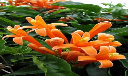 Zdjecie PANAMA / Chiriqui Province / Boquete - Mi Jardin es Su Jardin / zaczarowany ogród