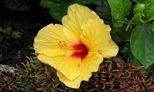 Zdjęcie PANAMA / Chiriqui Province / Boquete - Mi Jardin es Su Jardin / zaczarowany ogód