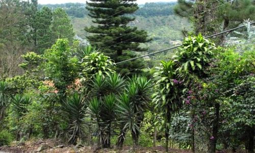 Zdjęcie PANAMA / Chiriqui Province / Boquete  / Mieć taki żywopłot...