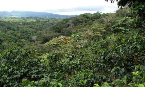 Zdjęcie PANAMA / Chiriqui Province / Boquete  / ech ta kawa...