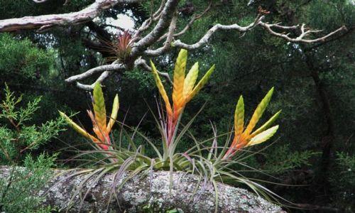 Zdjęcie PANAMA / Chiriqui Province / Boquete / W koronach drzew