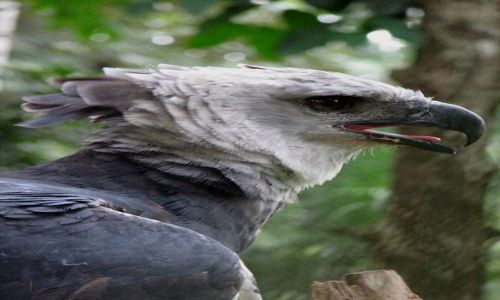 Zdjęcie PANAMA / Summit / Botanical Garden / Ptasi symbol Panamy