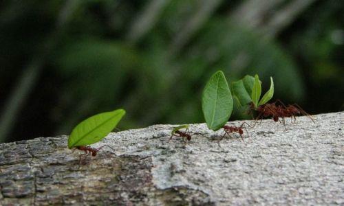 Zdjecie PANAMA / Summit / Botanical Garden / Na grzyby :)