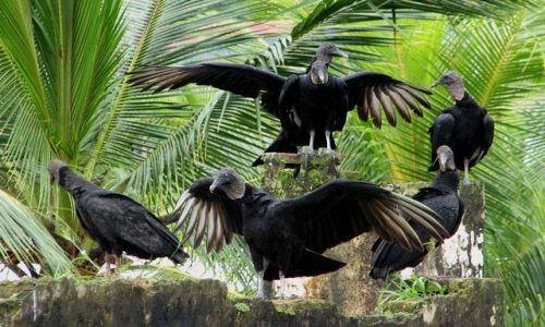 Zdjecie PANAMA / Colon Province / Portobelo - Fuerte San Jeronomo / Urocze ptaszyska :)
