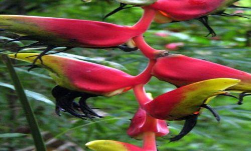 Zdjecie PANAMA / Panama City / Parque Natural Metropolitano / Rośliny Panamy