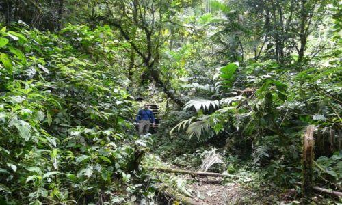 Zdjecie PANAMA / okolice Boquete / Sendero de Quetzales / w lesie chmurowym