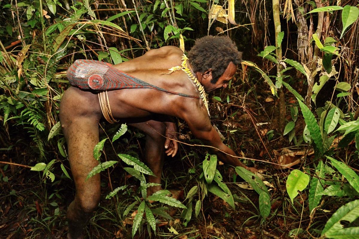 Zdjęcia: dwa dni marszu od wioski Mabul, las deszczowy, Papua Zachodnia, Korowaj sprawdza pułapkę zastawioną (onegdaj) na dziką świnię, PAPUA NOWA GWINEA