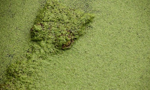 Zdjęcie PAPUA NOWA GWINEA / Milne Bay / Alotau / oko w oko z krokodylem