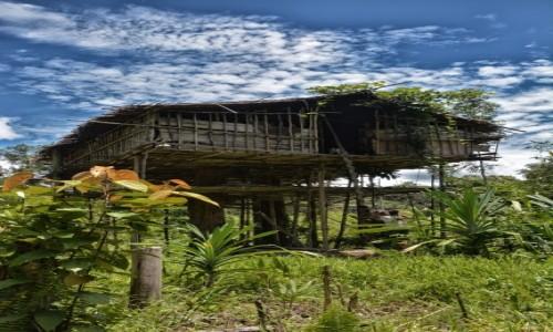PAPUA NOWA GWINEA / Papua Zachodnia / dwa dni marszu od wioski Mabul, las deszczowy / Domek Korowajów - naszych gospodarzy