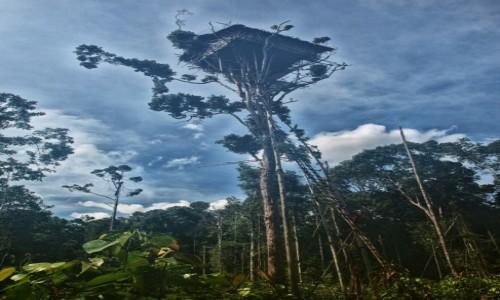 Zdjecie PAPUA NOWA GWINEA / Papua Zachodnia / dwa dni marszu od wioski Mabul, las deszczowy / Domek Korowajów