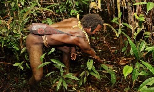 Zdjęcie PAPUA NOWA GWINEA / Papua Zachodnia / dwa dni marszu od wioski Mabul, las deszczowy / Korowaj sprawdza pułapkę zastawioną (onegdaj) na dziką świnię
