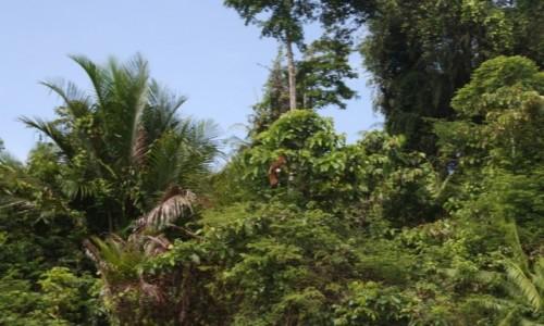 Zdjecie PAPUA NOWA GWINEA / - / gdzieś w jungli / Papua las deszczowy papugi