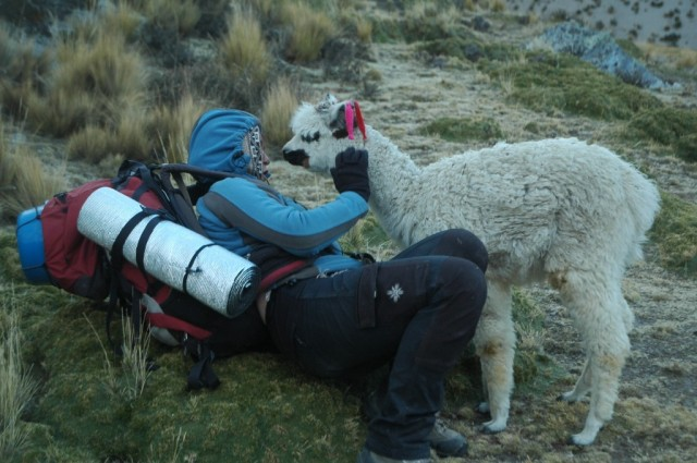 Zdjęcia: Peruwiańskie Andy, Arequipa, Mała zagubiona Alpaczka i ja(zdjęcie do art), PERU