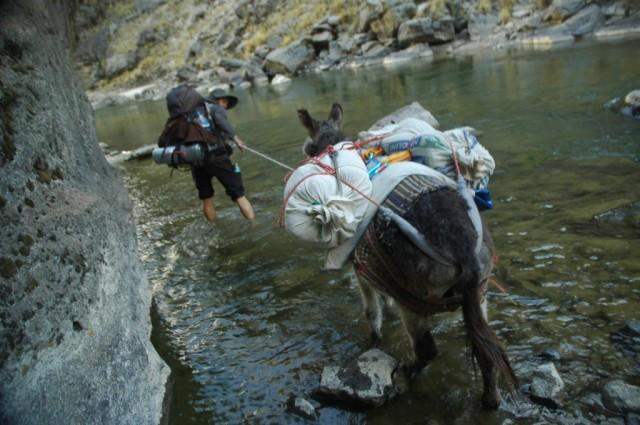 Zdjęcia: Peruwiańskie Andy, Arequipa, Nie każdy osioł boi się wody :) (zdj. do art), PERU