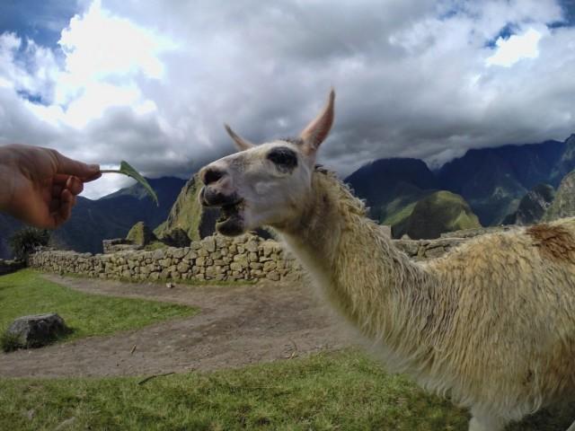 Zdjęcia: Machu Picchu, Cusco , Wizyta w Machu Picchu, PERU