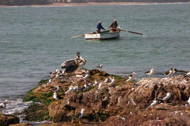 Zdjęcia: Rezerwat Paracas, Zatoczka, PERU