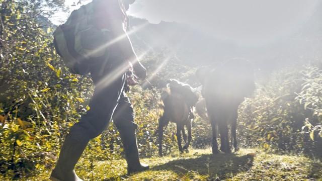 Zdjęcia: Vitos, Vilcabamba, ,Prowadził Uriel, poganiając muły , PERU