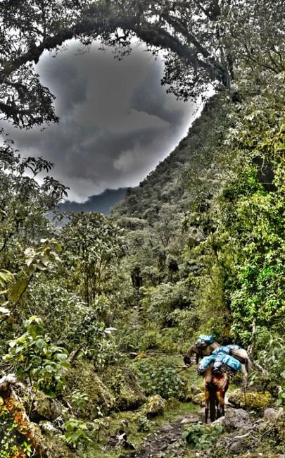 Zdjęcia: Vilcabamba, Vilcabamba, Kręta ścieżka ginęła pod baldachimem drzew, PERU