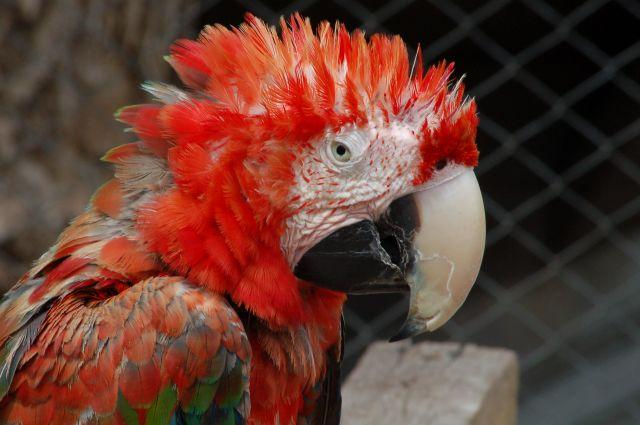 Zdjęcia: Cusco, Cusco, Stara papuga, ale jaka..., PERU