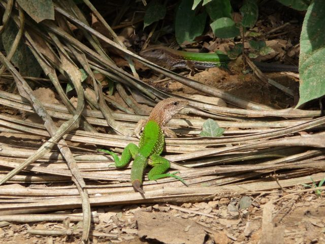 Zdjęcia: Manu, dżungla, kamuflaż, PERU