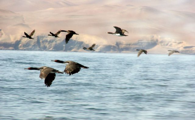 Zdjęcia: Wyspa Islas Ballestas, * * *, PERU
