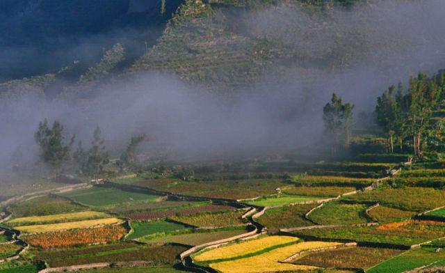 Zdj�cia: Okolice Kanionu COLCA, Kolorowe tarasy, PERU