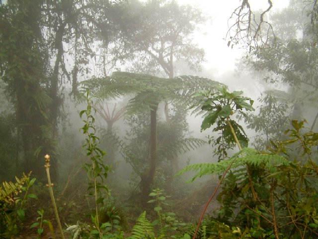 Zdjęcia: Okolice miejscowości Acomayo, przełęcz Carpish, Środkowe Andy, W lesie chmurnym, PERU