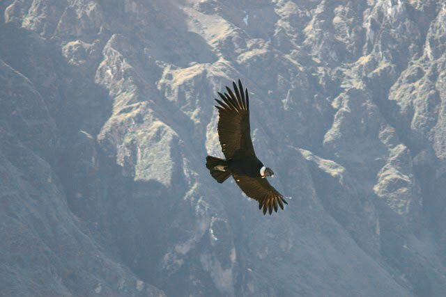 Zdjęcia: W DRODZE DO M>P>, El Condor Passa, PERU