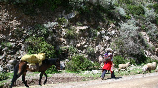 Zdjęcia: W droze do CRUZ del Condor, W drodze, PERU