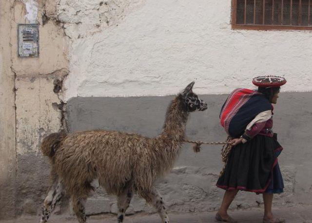 Zdjęcia: Cuzco, Pani z lama, PERU