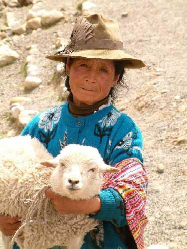 Zdj�cia: Park Narodowy Huascaran, jezioro Querococha, Andy, Kordyliera Bia�a, Z barankiem, PERU