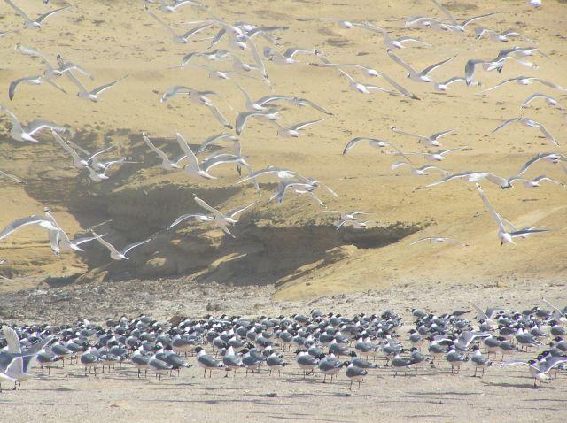 Zdjęcia: okolice Ica, rezerwat Paracas, PERU