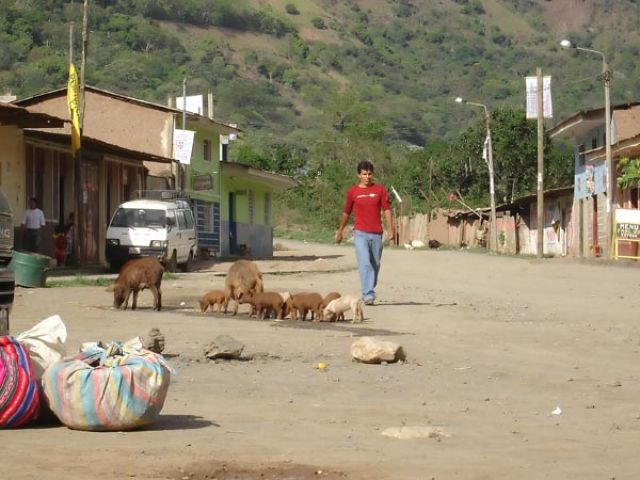 Zdjęcia: Santa Teresa, W drodze z Cusco do Aguas Calientes, Pochod swinek, PERU